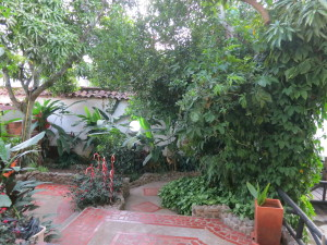 The Garden at Macondo